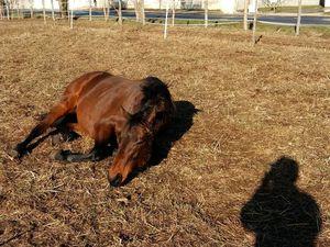 Avoir son cheval au pré : plaisir ou galère ?