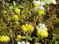 Quelques fleurs de mon jardin en Haute-Loire...