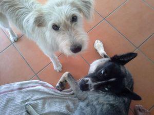 POUPIE - femelle croisée griffon - adoptée grâce à notre partenariat avec la fourrière