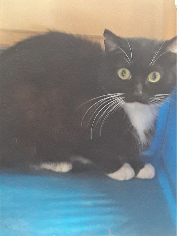 A adopter : FILOMENE, petite chatte stérilisée d'environ 18 mois, très farouche, à socialiser