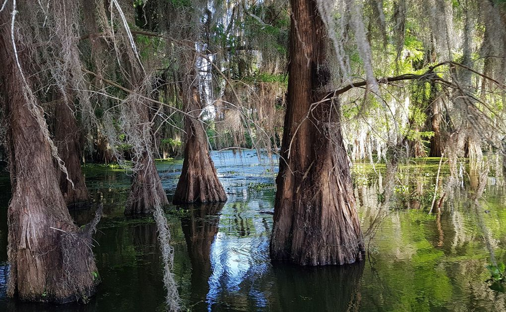 Diaporama : Cajun Swamp Tour sur le Lake Martin