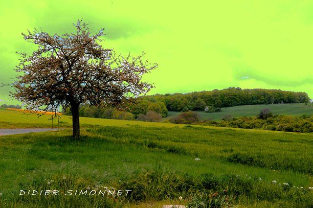 Photographies et arrangements : Didier Simonnet