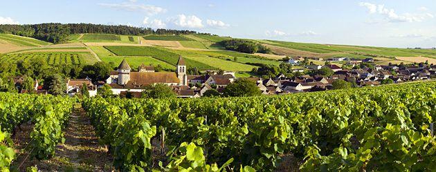 Le vignoble de l'Auxerrois labellisé !