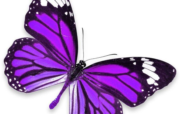 Une journée en WW Violet 💜 Journée 1
