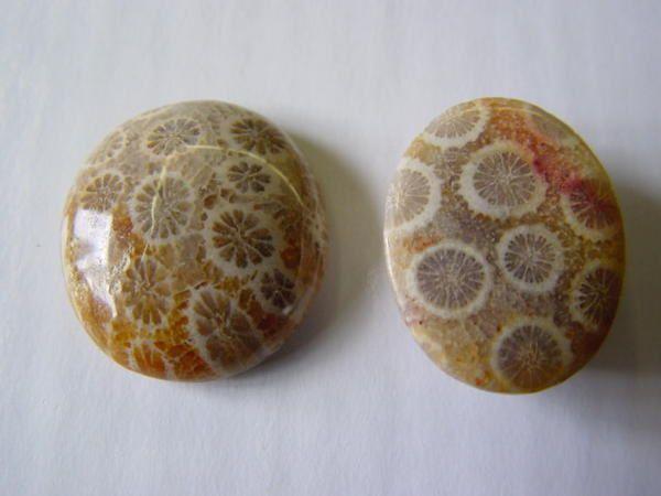 """<p></p> <p>Les coraux fossiles sont, comme les éponges, des organismes fréquemment négligés par les amateurs. </p> <p>Pourtant leur esthétique et leur grande variété en fait un groupe agréable à étudier et à collectionner.</p> <p>Les quelques pièces ici présentées appartiennent toutes à ma collection.</p> <p>A plus !</p> <p>Phil """"Fossil""""</p> <p></p>"""