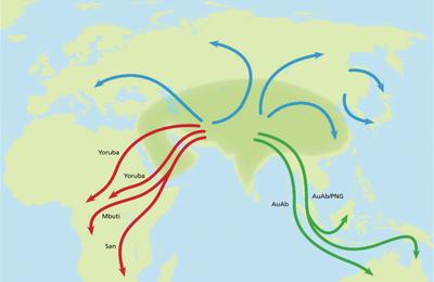 Plus que multi-régional  : D'après Ulfur Arnason, l'Homo sapiens eurasien aurait colonisé l'Afrique, l'Europe et l'Asie