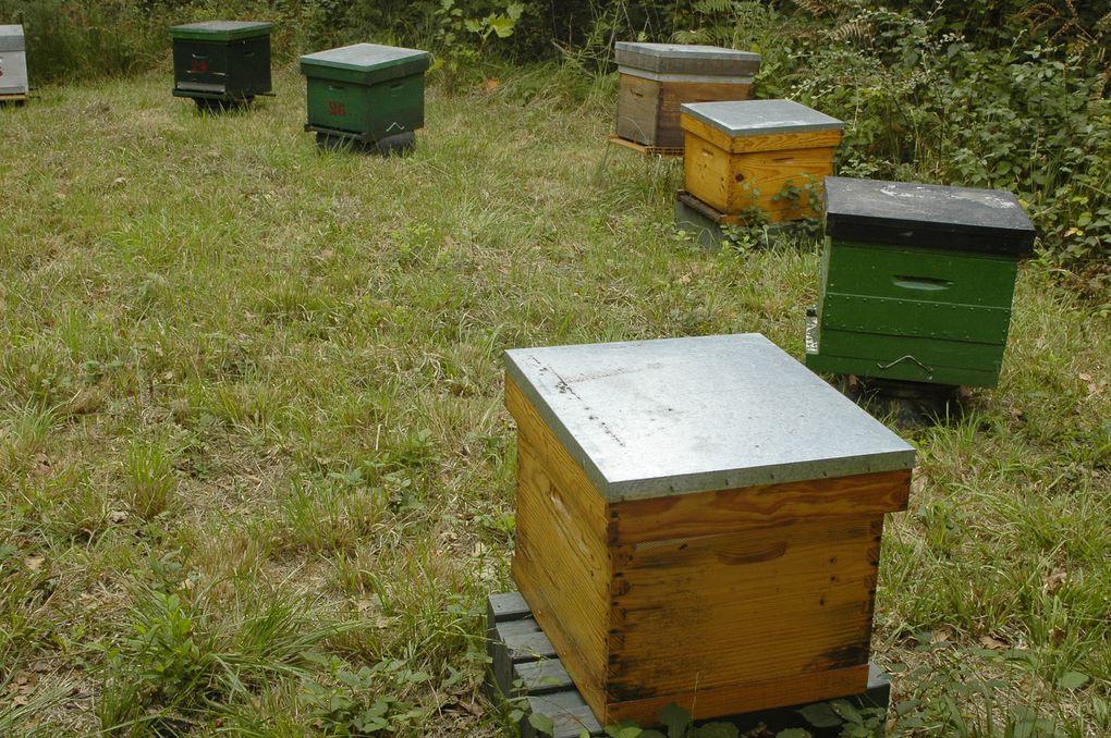 Conte, chant, musique danse autour des abeilles lors de la journée balade poétique des abeilles du 12 septgembre 2009 à Ustaritz