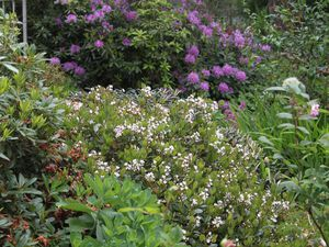 Visite du jardin de Valérie