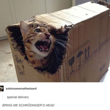 Bring me Schrödinger Head !