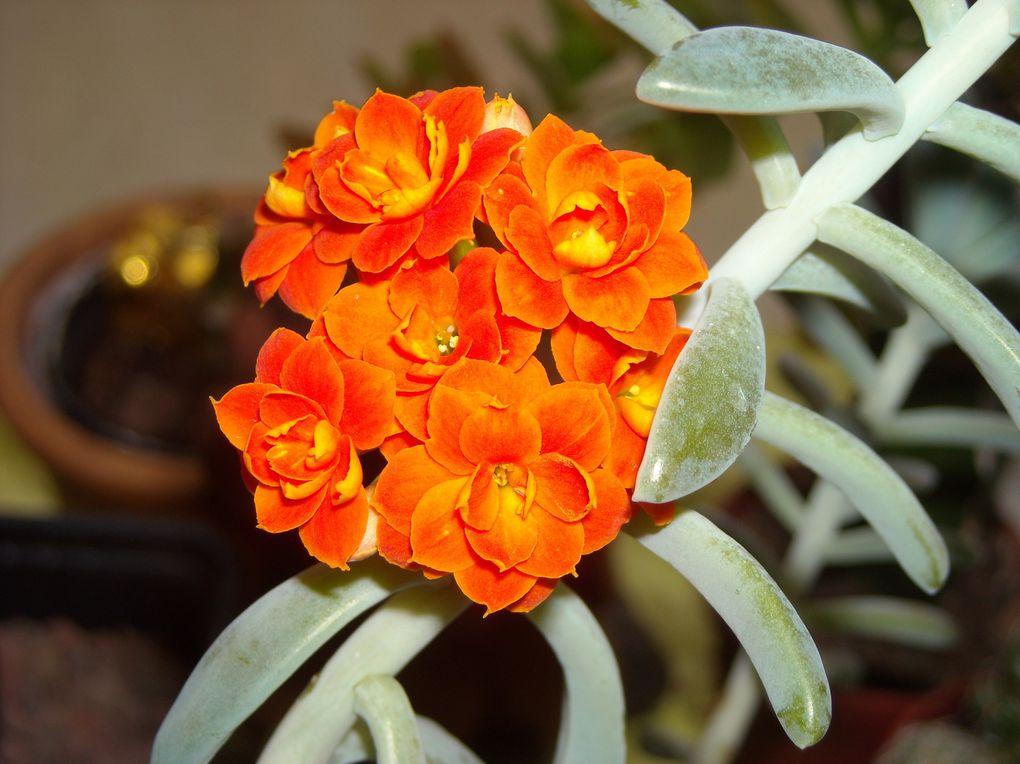 Mes nouvelles plantes, floraisons 2011