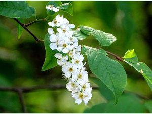 Bonne fête des mères... avec des fleurs blanches - 7 photos