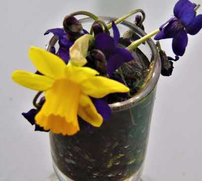 Images de printemps