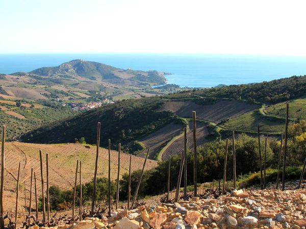En formation à Toulouse, les futurs sommeliers ont arpenté les vignes du Languedoc et du Roussillon