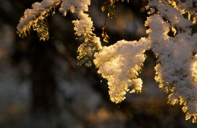 Le coucou du Haïku : solstice d'hiver