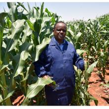Nouvelle étude : les cultures d'OGM réduisent l'utilisation de pesticides et les émissions de gaz à effet de serre
