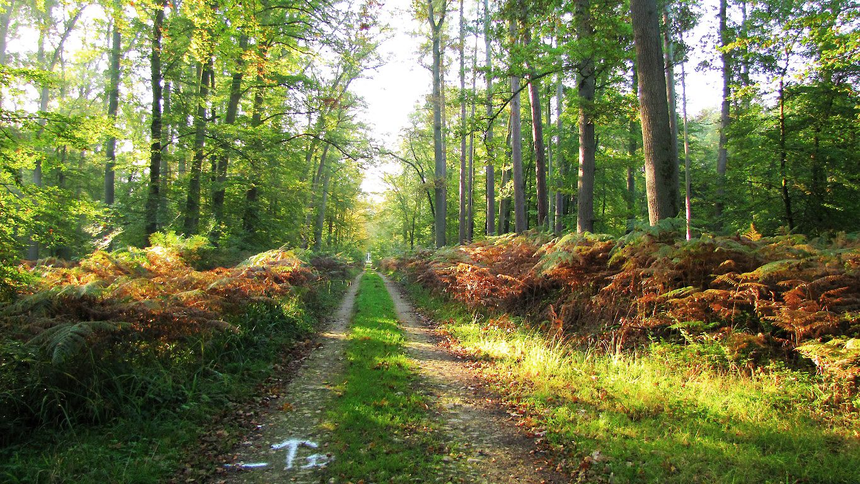 carrefour_Route du Vivier Payen_Route du Grand Veneur