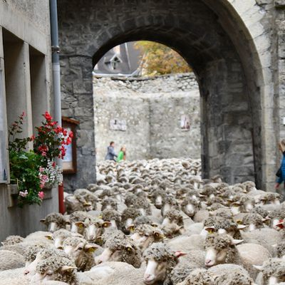 "Colmars les Alpes, Fête de la transhumance23 et 24 octobre ""Revendran"""