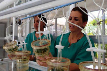Cuba : la recherche universitaire au service de l'agriculture!