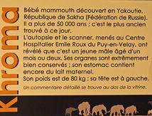 Khroma - Musée Crosatier du Puy en Velay - le mammouth congelé