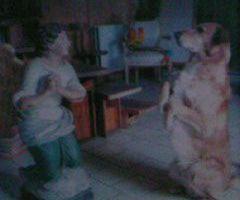 Animaux/ Mieux vaut parfois les laisser à la maison... Histoire de notre chien rendu fou un soir de feu d'artifice...