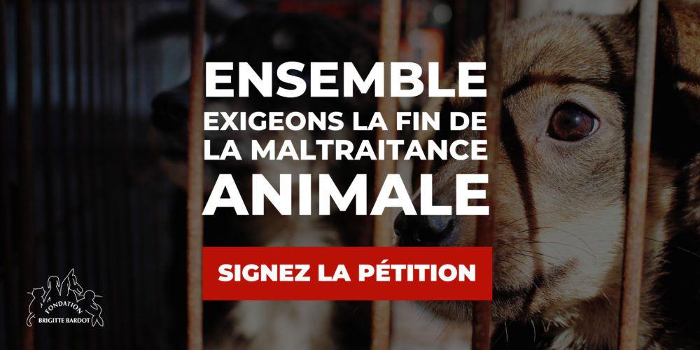 Pétition : Ensemble exigeons la fin de la maltraitance animale !