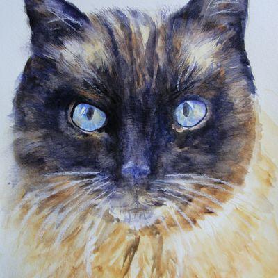 Aquarelle: portrait chat