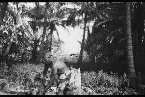 PAUL GAUGUIN (12), l'agriculture