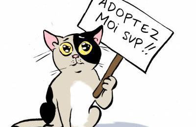 PRECAUTIONS ADOPTION CHATS/CHATONS
