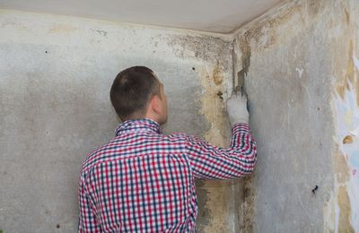 Crawl Space Mold Removal - What You Can Do Yourself