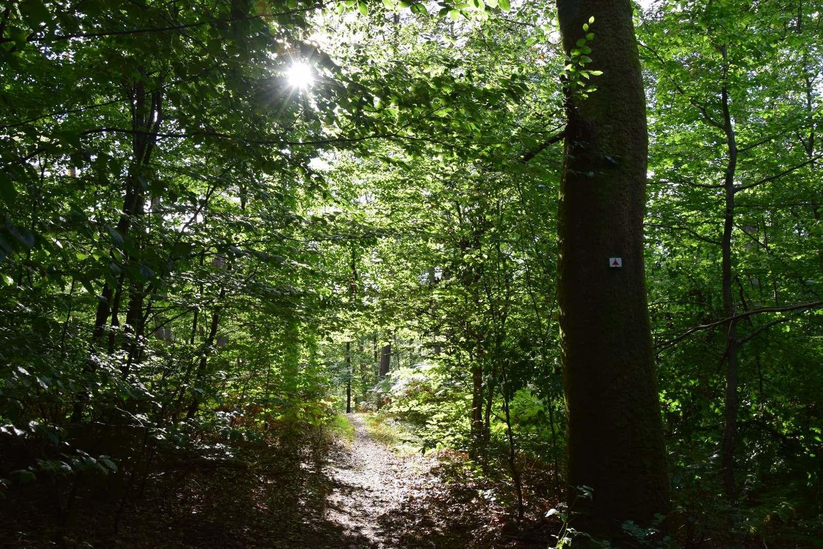 Dans la forêt de Lemberg, fin d'après-midi
