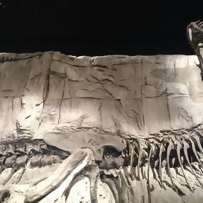 Road trip - step 23 : Tyrell Museum & Dinosaur Provincial Park