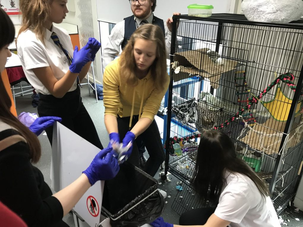 SMGB19 Communication therapy animals