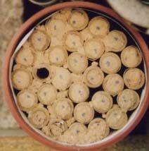 Les Osmies rufa ont operculé leur nid personnel mais ont aussi comblé les interstices entre chaque trou (sur la gauche de l'image). Les petits points noirs sont des repères lorsque je compte les nids operculés.