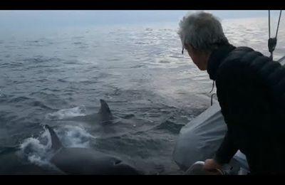 Video - killer whales attack a catamaran off the coast of A Coruña