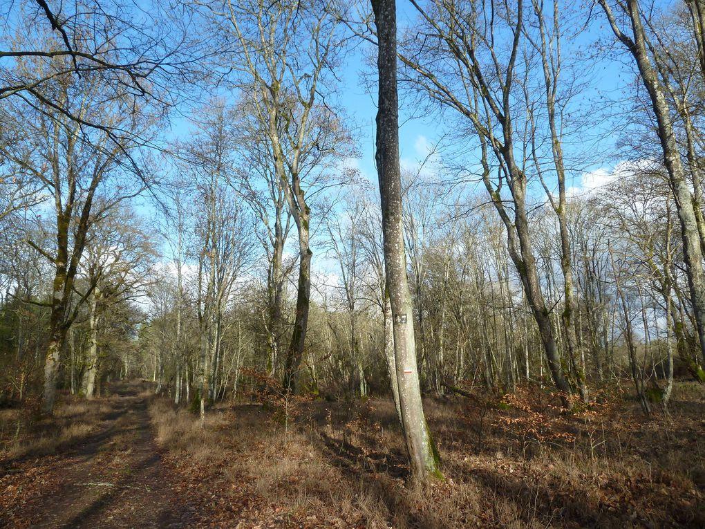 Randonnée en boucle de Bourron-Marlotte - 21,8 km.
