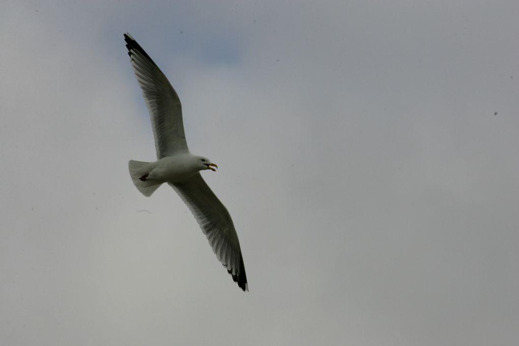 Album - Les oiseaux