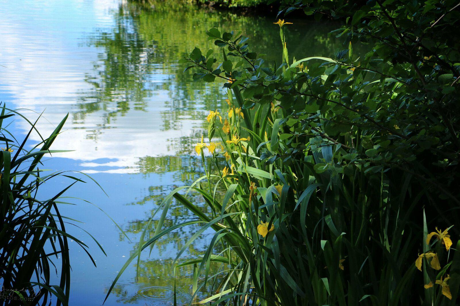 Au Lac de Gassicourt