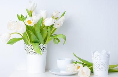 Décoration - Fleurs - Vase - Tulipes - Blanc - Photographie - Wallpaper - Free