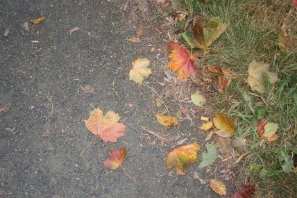 1er jour de l'automne
