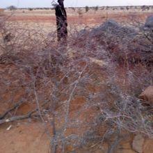 Niger, le crime ordinaire se banalise, un racisme récurant