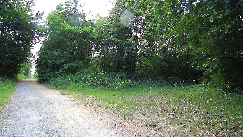 carrefour_Route Forestière de Sainte-Croix_Sentier_2 (parcelle 100)