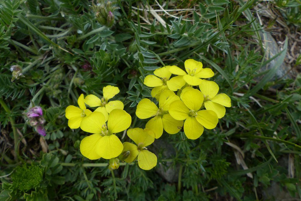 A vous de retrouver le nom de chacune de ces fleurs !!!