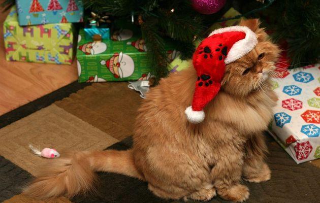 Fêtes de fin d'année : Les dangers pour mon chat !