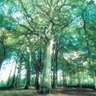 Bois de Frémontiers : du nouveau