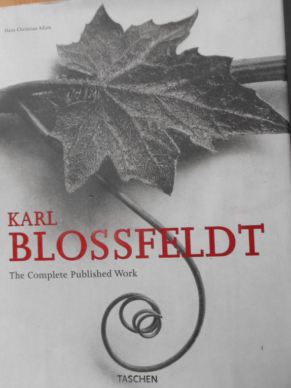 """livre en papier de chanvre """"le temps qui passe"""" avec des impressions de Karl Blossfeld"""