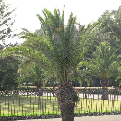 Avis sur l'hôtel Le Tivoli Agadir Maroc