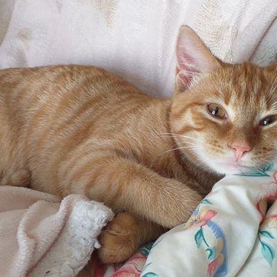 Loki : un petit chat heureux