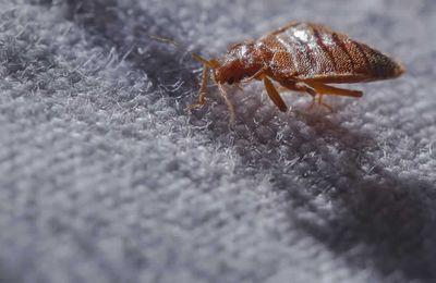 Eloigner les punaises de lit