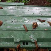 Quand on souffre de canicule, on rêve de pluie, mais pluie rime avec gastéropodes - Doc de Haguenau