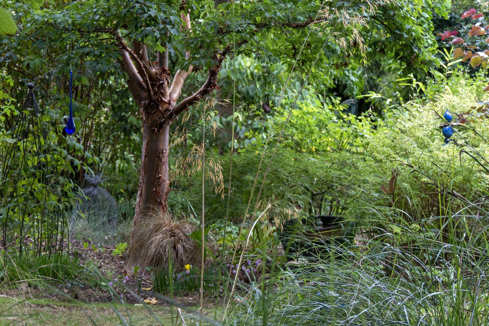 Le visiteur visité ou le jardin d'Alain d'Arrosoirs et Sécateurs